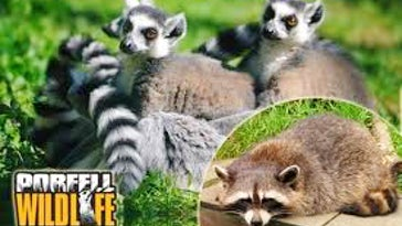 Portfell Wildlife Park