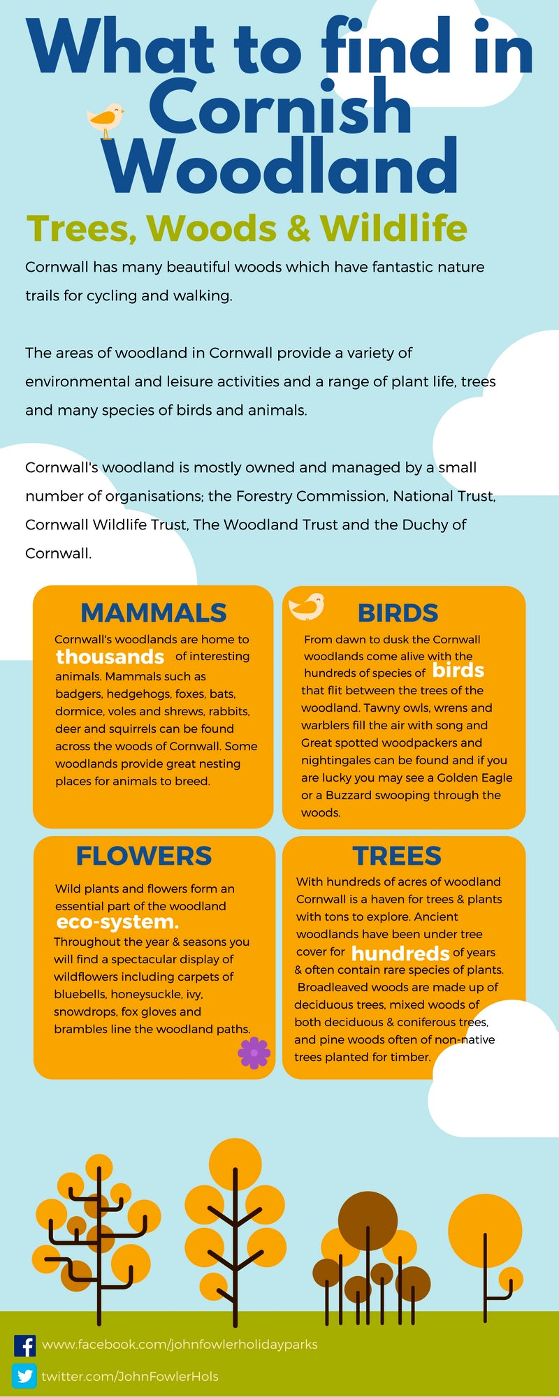 What to find in Cornish Woodland