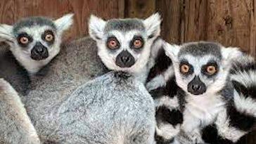 Portfell Wildlife Park & Sanctuary